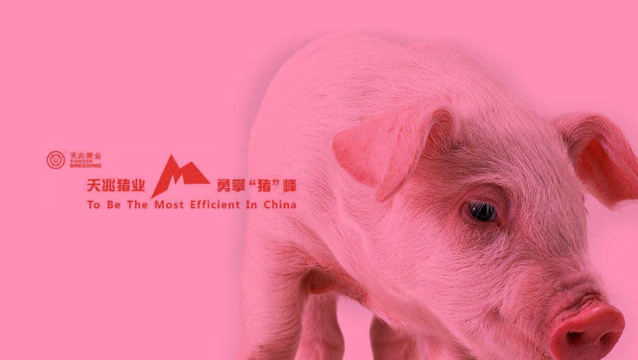 天兆猪业网上商城